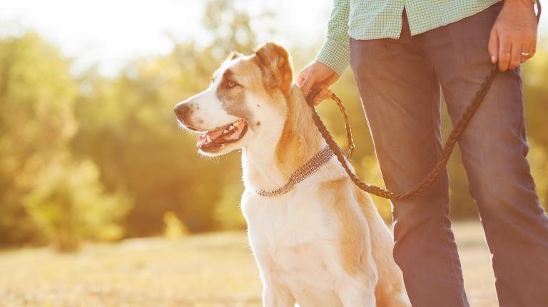 remedios naturales para la próstata de perro 2020
