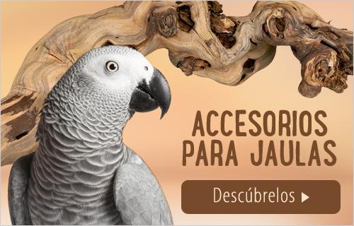 accessories bird