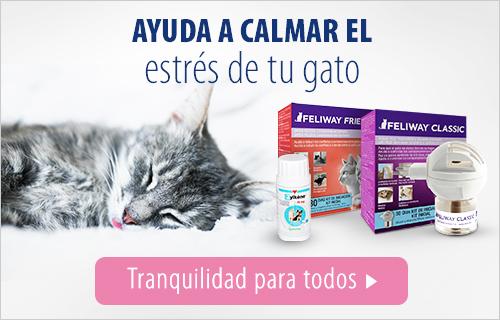 travel wellness gatos