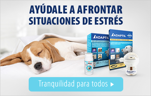 travel wellnes perros