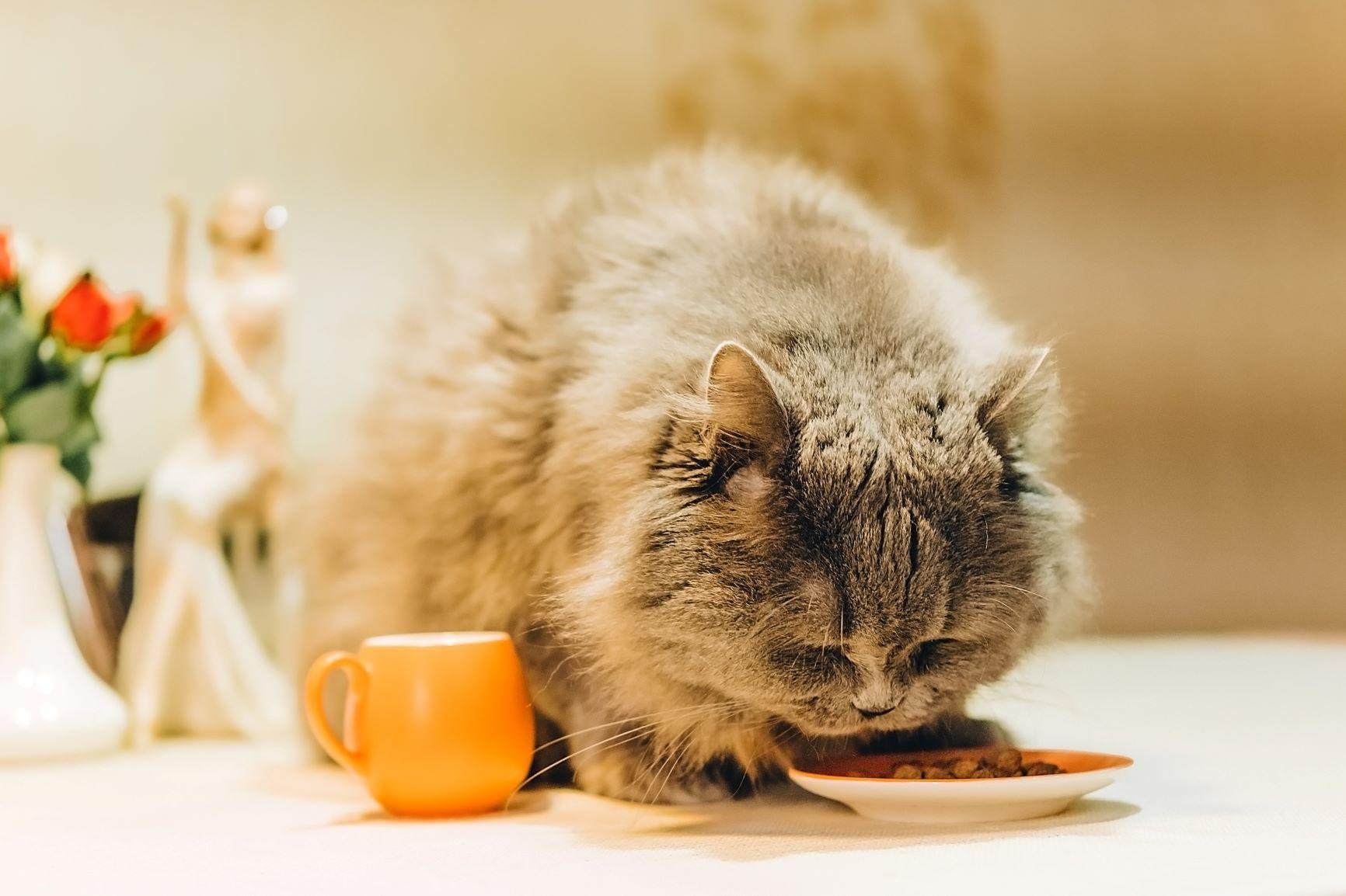 Comida para gatos con sobrepeso