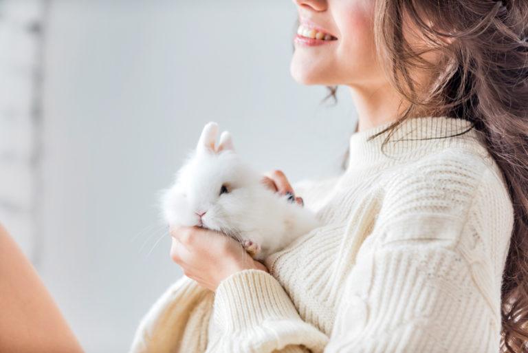Cuidados de un conejo enano