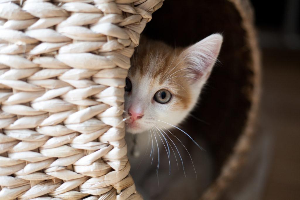 kat miauwt - es
