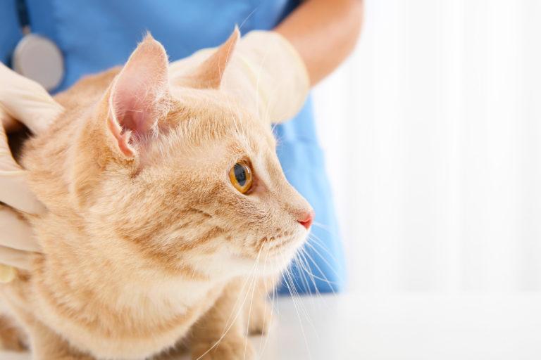 Trastornos nerviosos y hormonales en gatos
