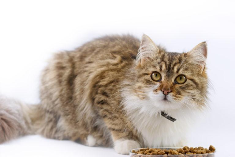 Comida para gatos diabéticos
