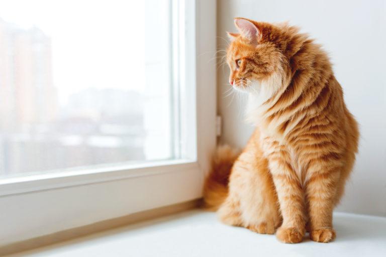 ¿Por qué marcan los gatos?