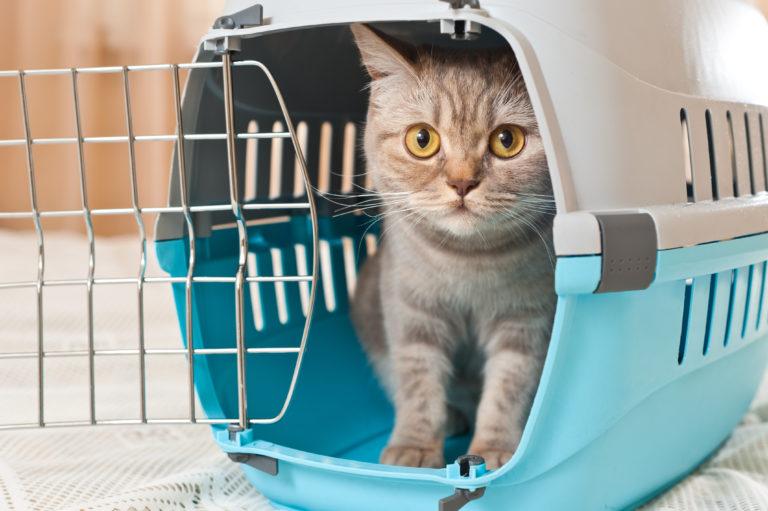 Viajar con gatos en barco