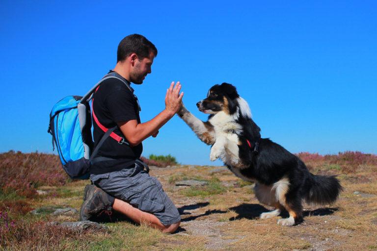 Los 10 mejores trucos para perros