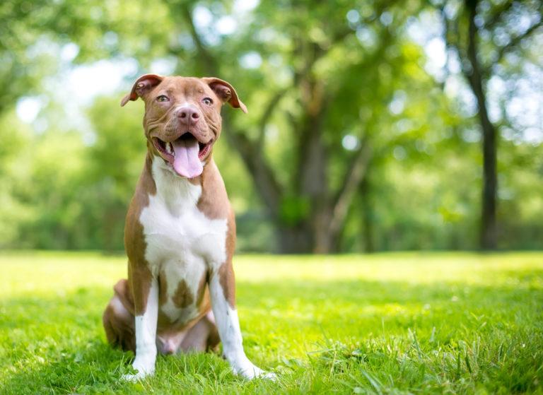 Seguro para perros PPP