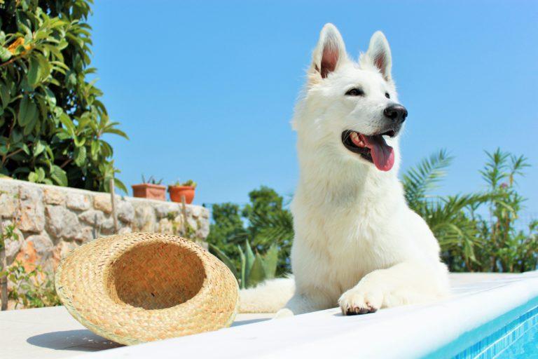 Protección solar en perros