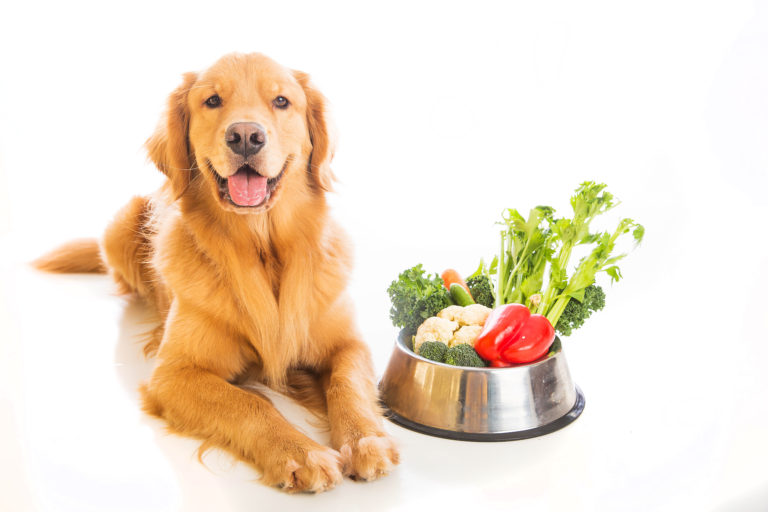 Comida vegetariana para perros
