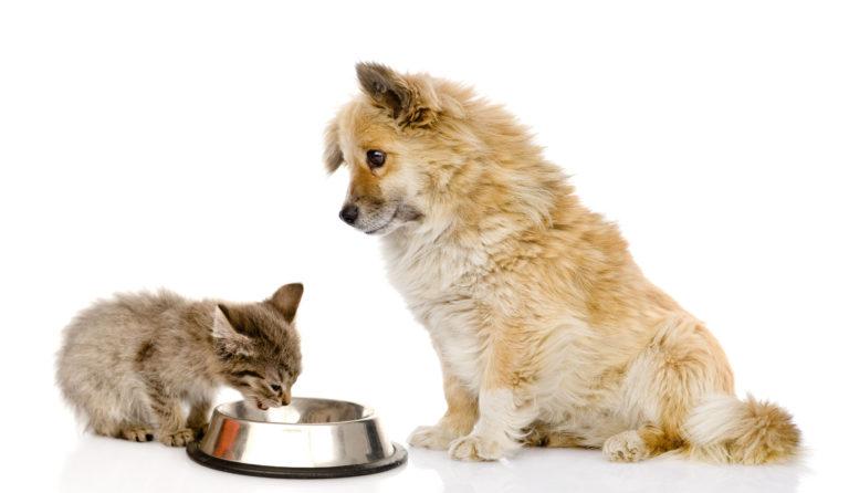 ¿Es mala la comida de gatos para perros?