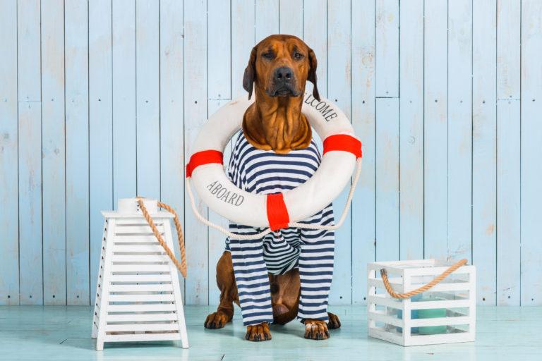 Viajar en barco con perros
