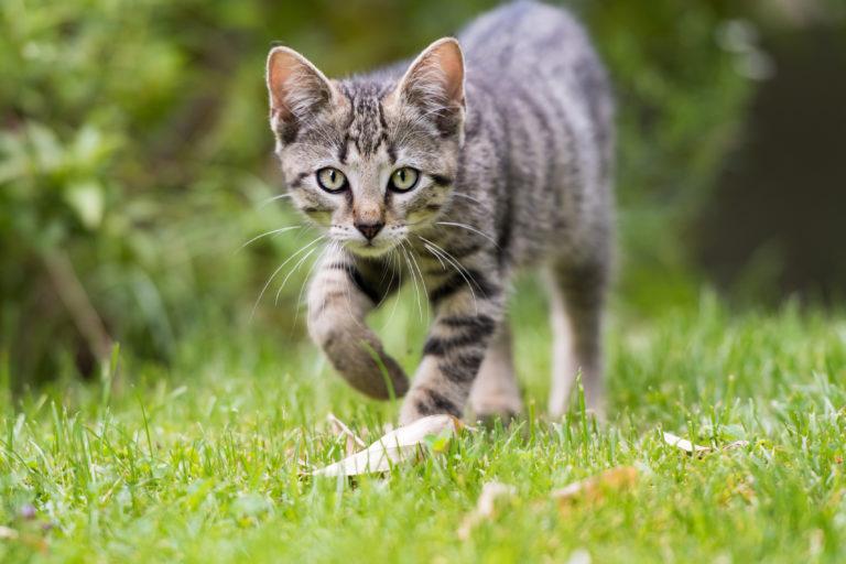Jardín seguro para gatos