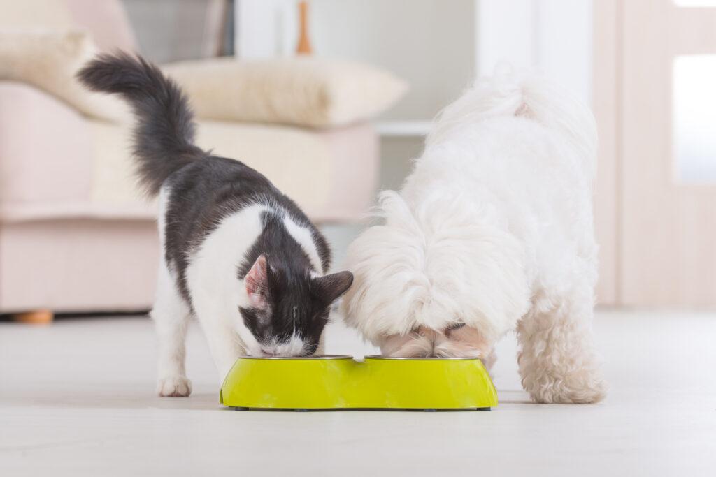 ¿Es mala la comida de perros para gatos?