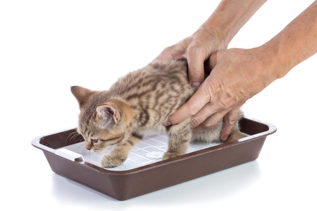 Cómo educar un gatito