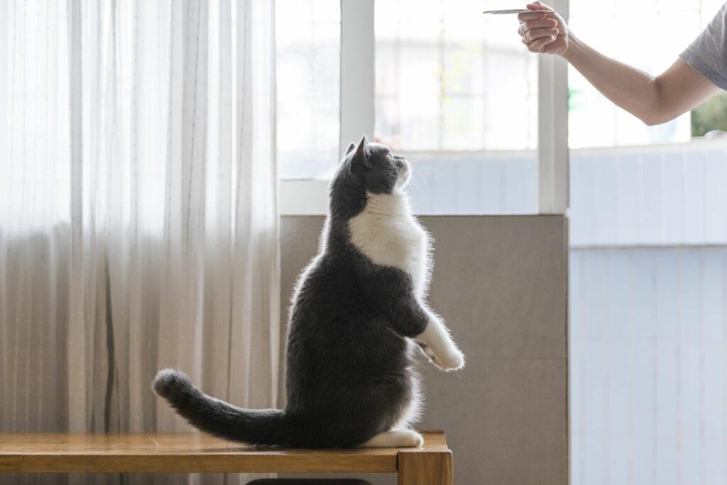 Adiestramiento para gatos con clicker 1