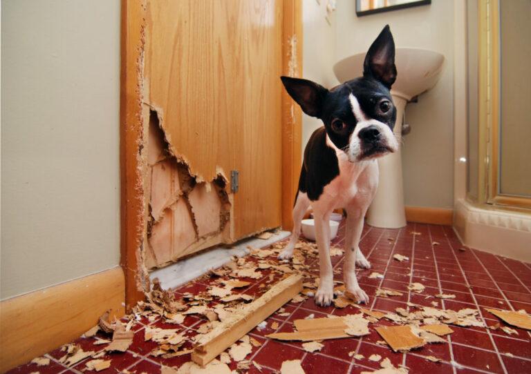 Mi perro destroza todo