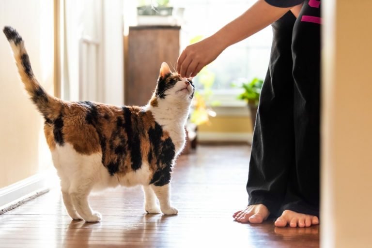 Adiestramiento para gatos con clicker
