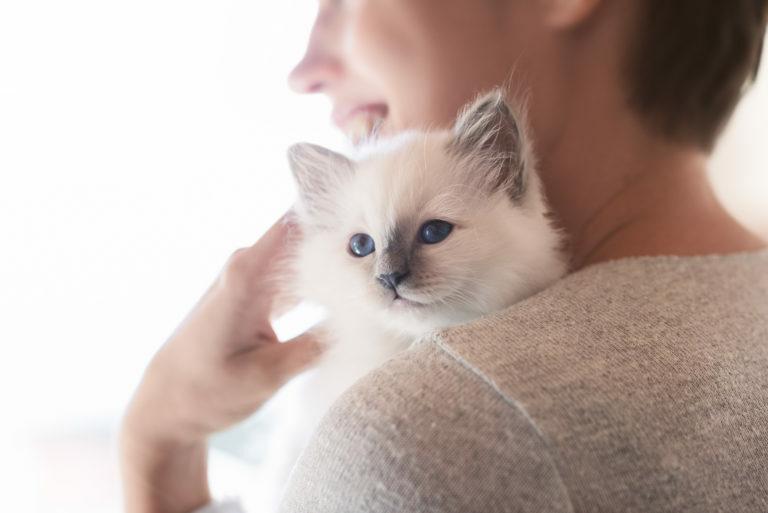 criadores de gato