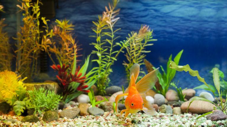 Enfermedades de peces de acuario