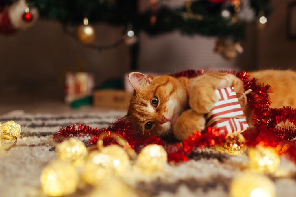 regalos de navidad para gatos