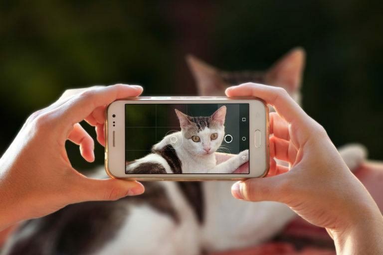 las mejores fotos de gatos