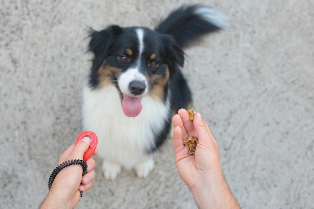 diestramiento con clicker para perros 2