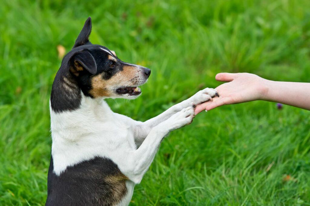 Adiestramiento con clicker para perros 3