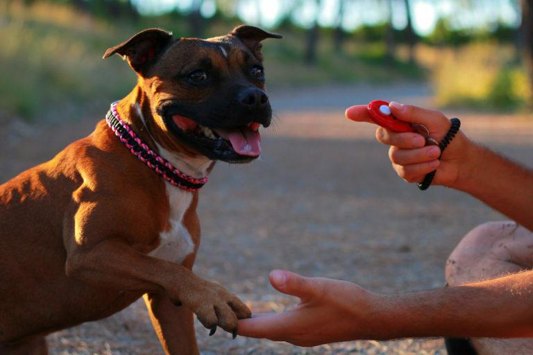 adiestramiento con clicker para perros
