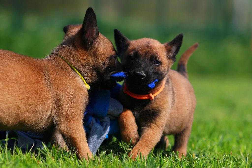 escuela para cachorros