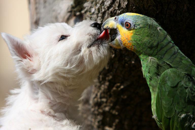 perros y pájaros juntos