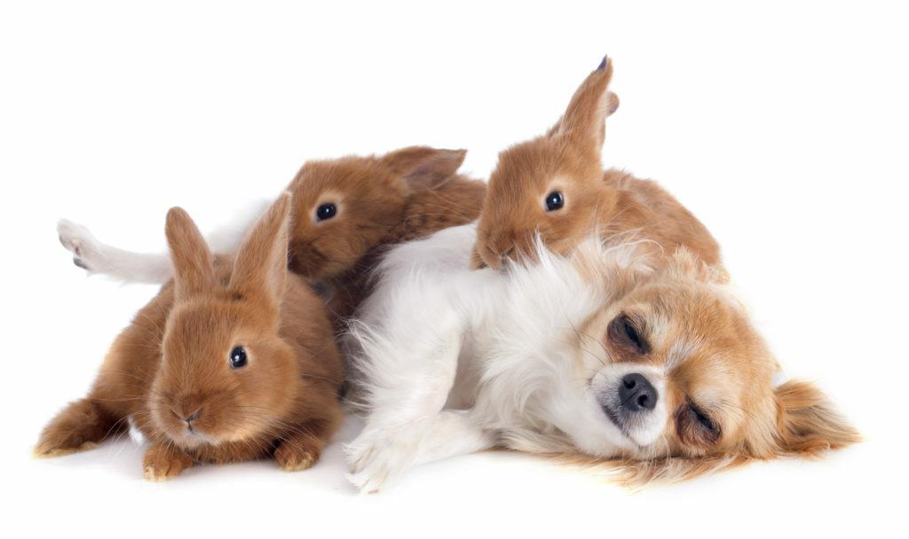 perros y roedores juntos