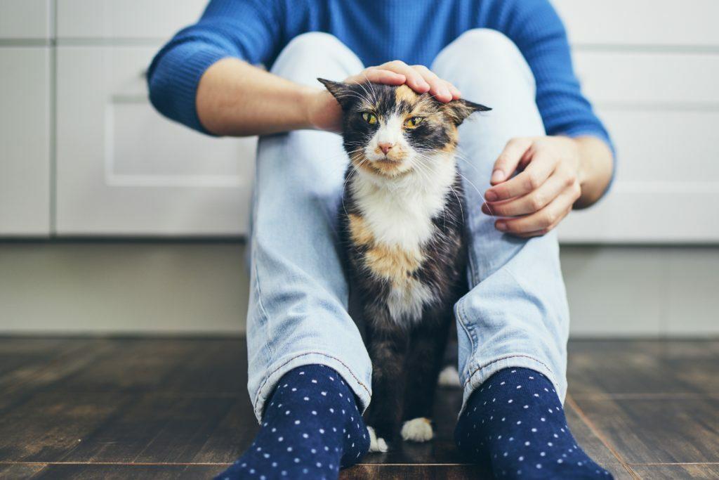 socializar a un gatito