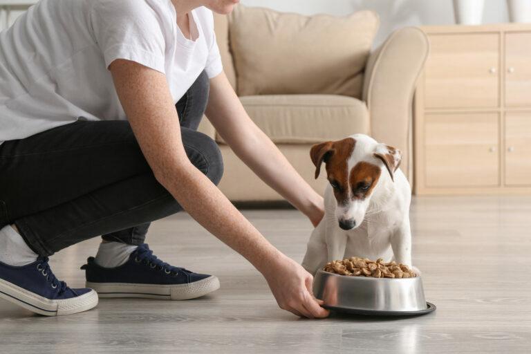 comida para perros enfermos