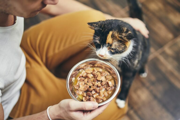 Falta de apetito en gatos