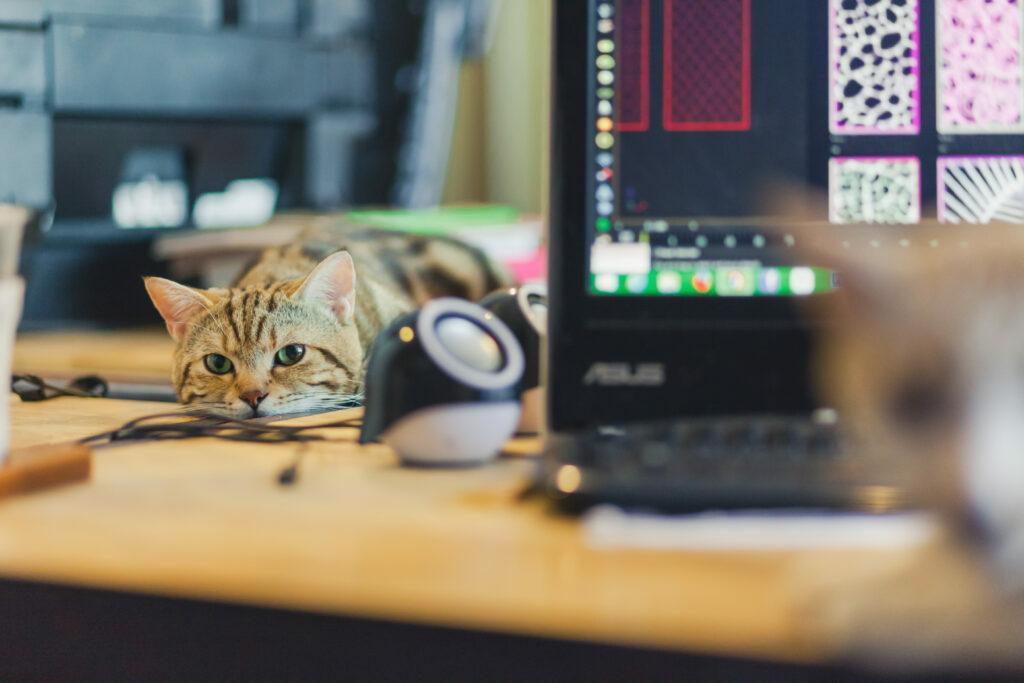 Trabajar desde casa con gatos