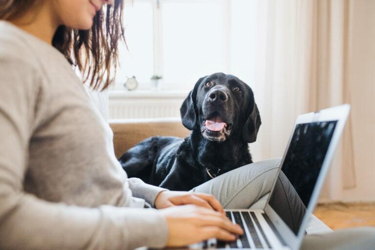 Trabajar desde casa con perros