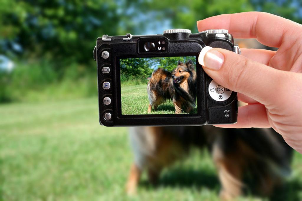 mejores fotos de perros