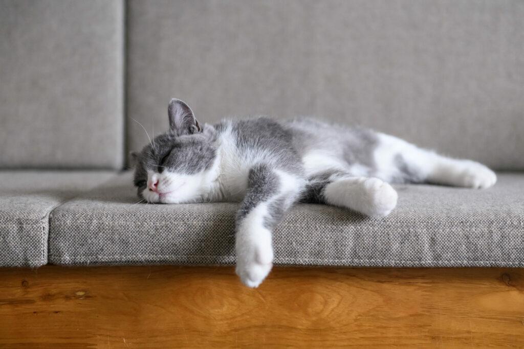 Agresividad en gatos castrados