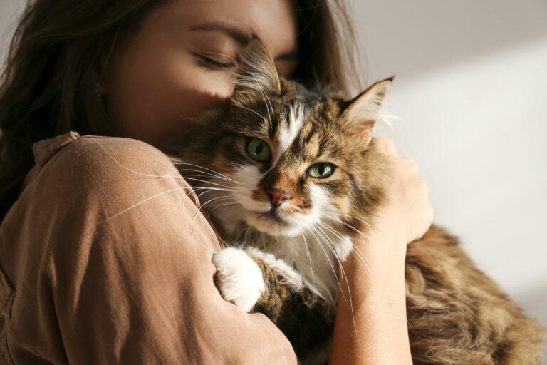 Adoptar un gato durante la cuarentena por el coronavirus