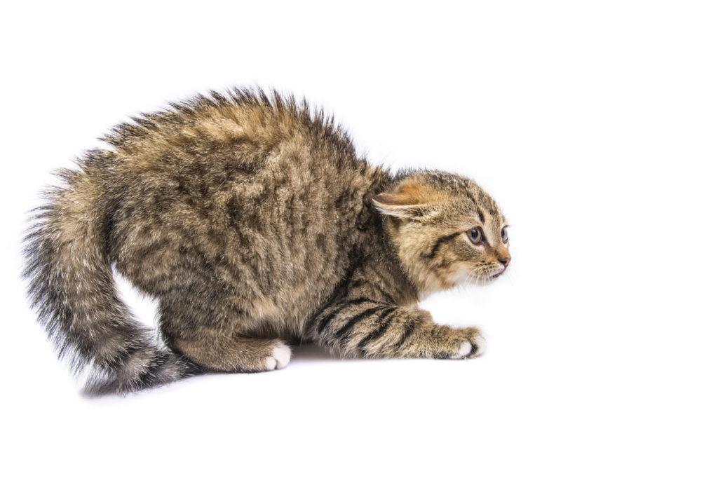 mi gato tiene miedo