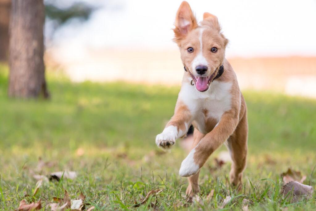 Adoptar un perro macho o hembra