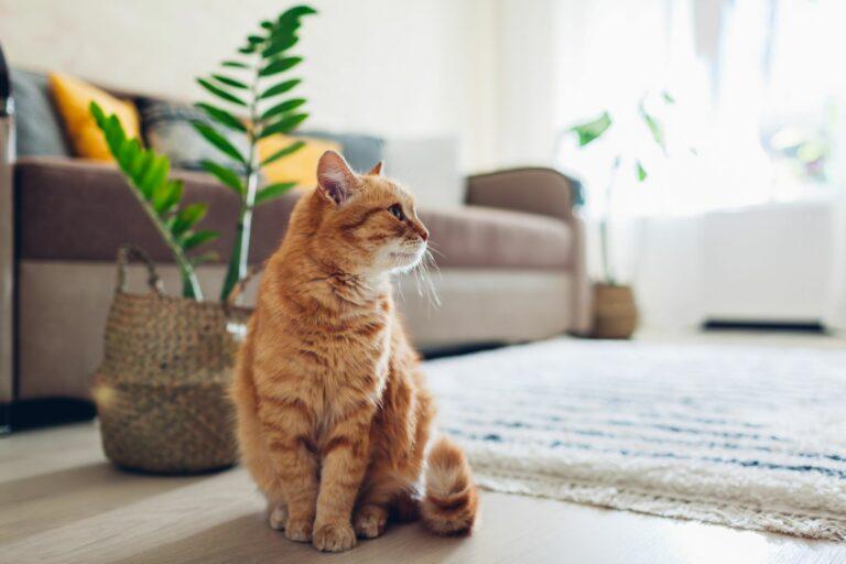 Cómo acostumbrar a tu gato a la rutina después del confinamiento
