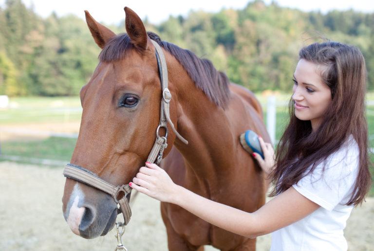 Los cuidados de los caballos