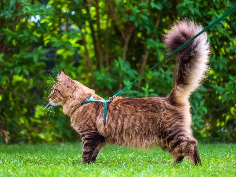 Pasear al gato