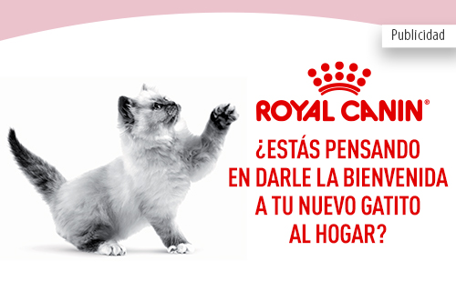 Royal Canin Gatitos