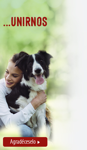 dia del perro right