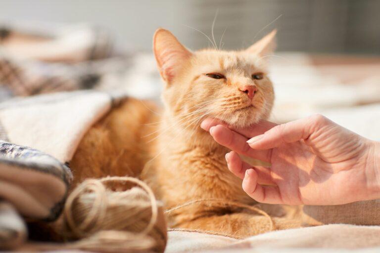 Ayudar en una protectora de gatos