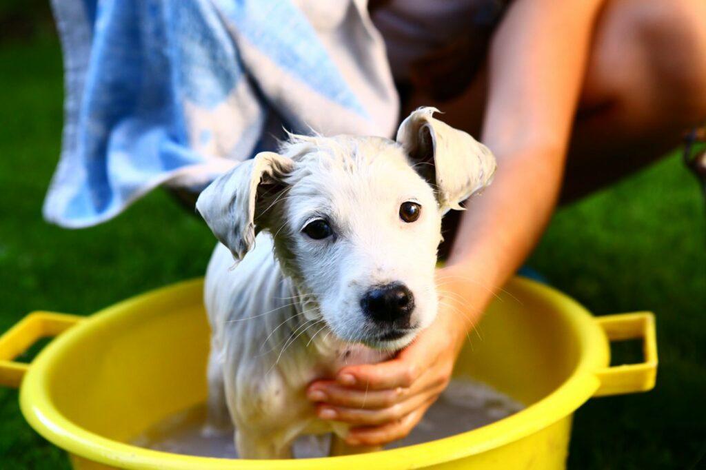 Bañar cachorro